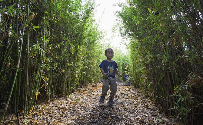 Learning Through Play at Themed Zones at Coastal PlayGrove's Nature Playgarden