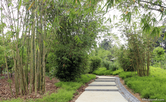 Bamboo collection at Learning Forest