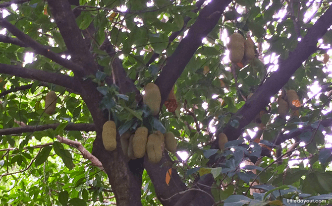 Fruit Tree Collection
