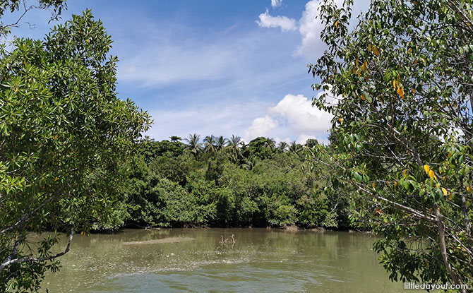 Forest Trail Past a Tidal River, Mangroves and Lotus Pond