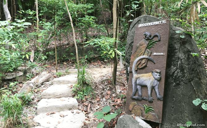 Nature walk, Mount Imbiah