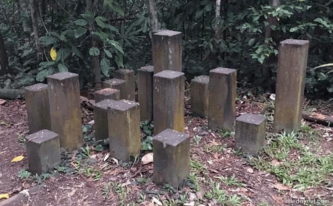 e17-Bukit-Timah-Nature-Reserve