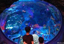 SEA LIFE Malaysia: LEGO-Flavoured Marine Adventures