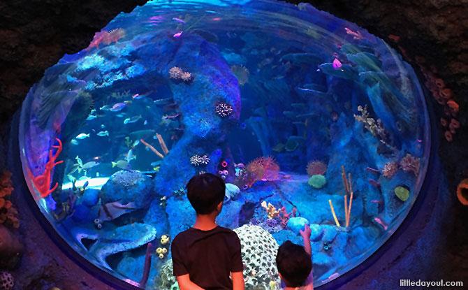 e17-sea-life-malaysia