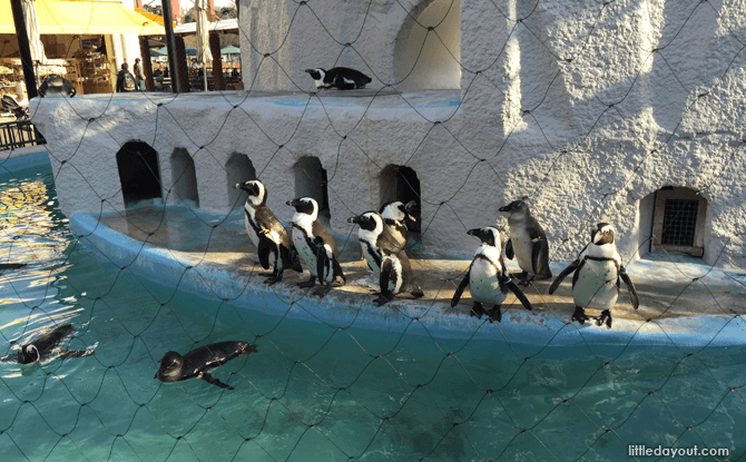 Ueno Zoo - Tokyo's Attractions for Kids