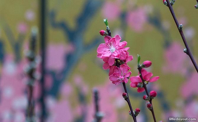Sakura Floral Display 2021 at Gardens by the Bay