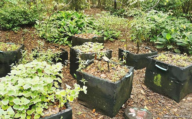 Potting Garden