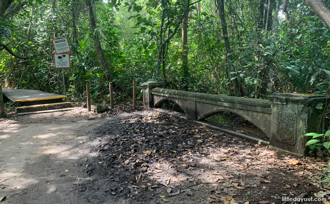 Relatively ornate stone bridge at MacRitchie Reservoir
