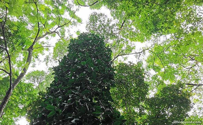 Trees at Jacob Ballas Children's Garden