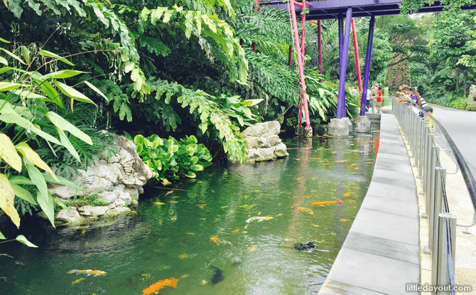 Fish pond, Gardens by the Bay