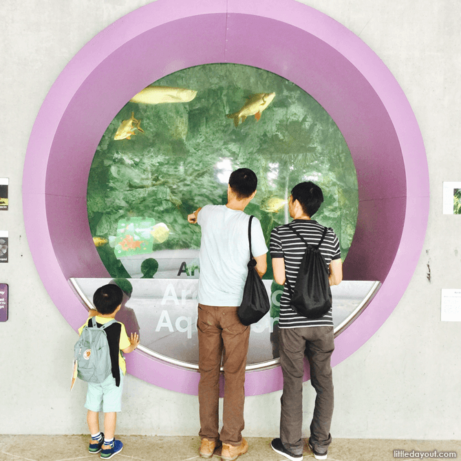 Fish at Gardens by the Bay