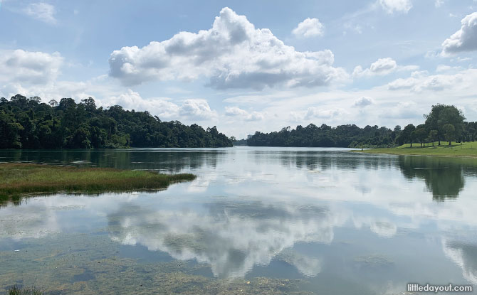 Waters of MacRitchie Reservoir