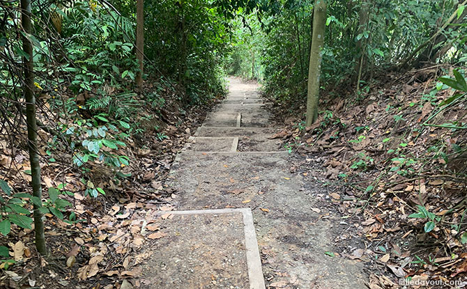 How Long to Walk the MacRitchie Reservoir Trail