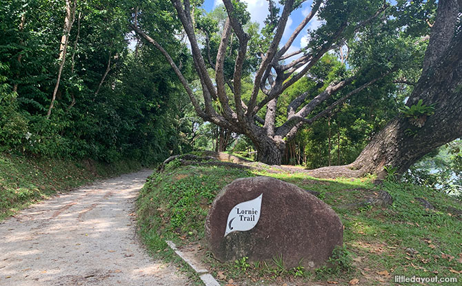 Intermediate MacRitchie Walk: Lornie Trail
