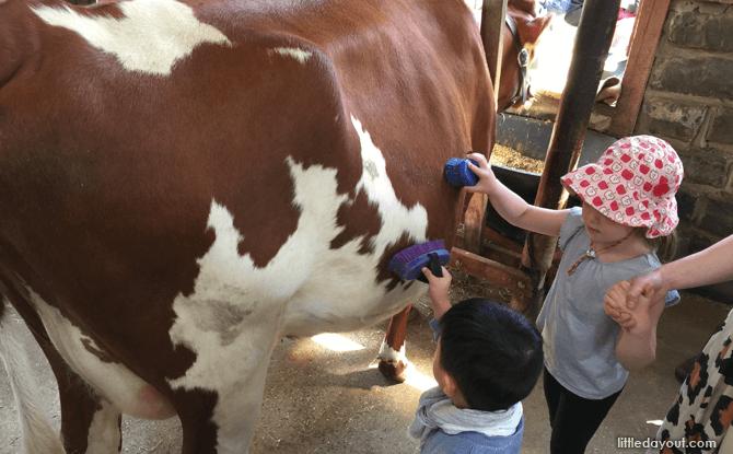 Melbourne Collingwood Children's Farm cow - Melbourne with kids