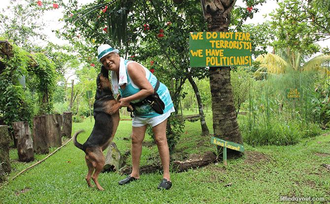 Bollywood Veggies - Ivy Singh & Dog