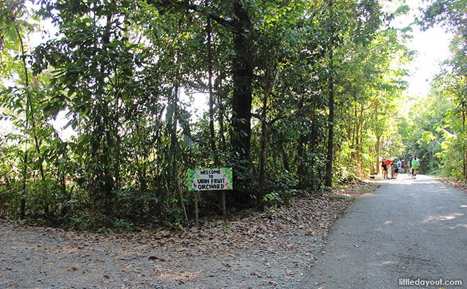 Pulau Ubin Chinese Kampong House: Ubin Fruit Orchard