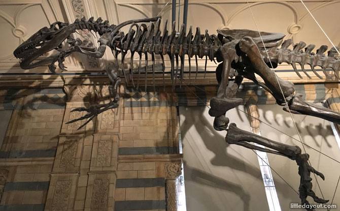 Dinosaur Gallery, Natural History Museum, London