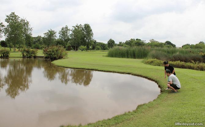 Sengkang Riverside Park wetlands