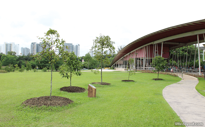Sengkang Riverside Park fruit trees