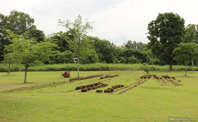 Sengkang Riverside Park rolling up green