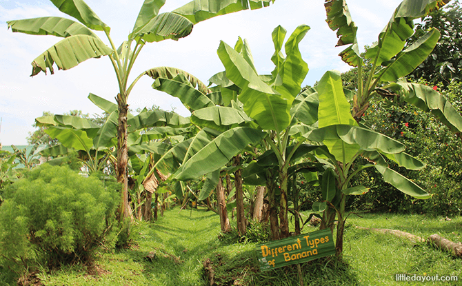 Bollywood Veggies - Bananas