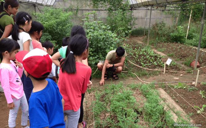 Weeding Plants at Kampong Kampus