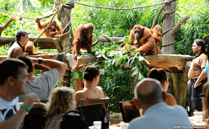 Jungle Breakfast at Singapore Zoo