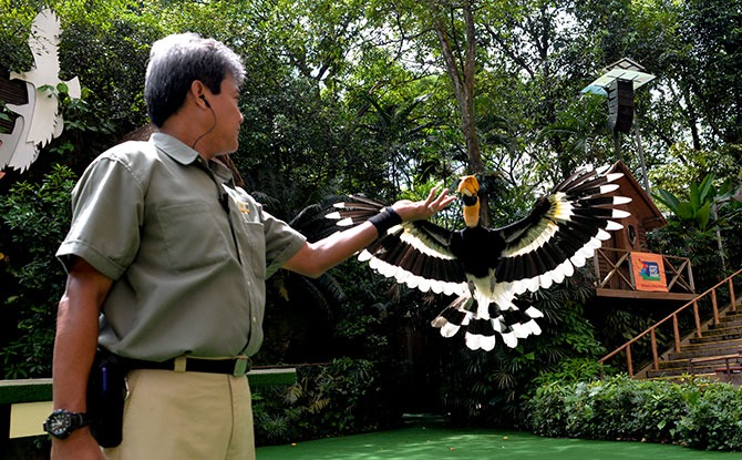 Jurong Bird Park 50 Special Edition Shows