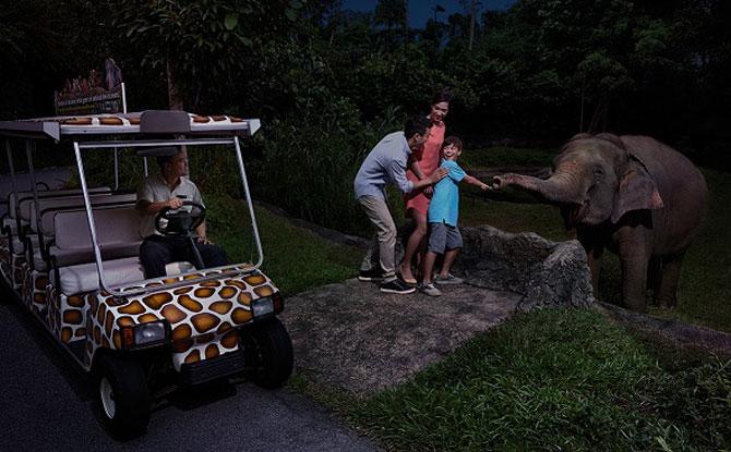 Safari Adventure Tour – 25th Anniversary Edition