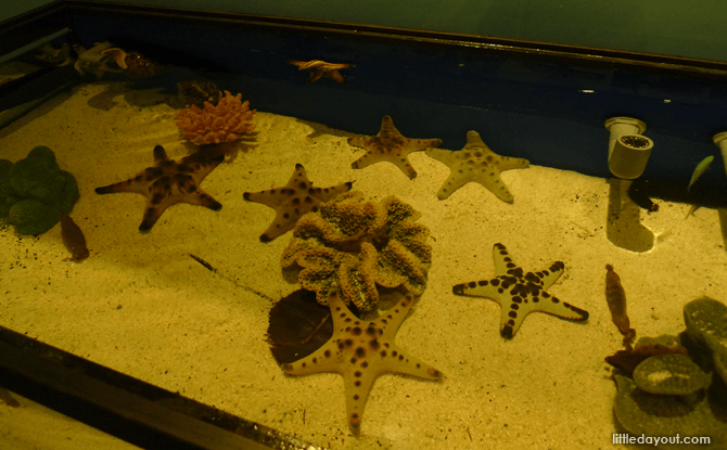 Imagine Native S.E.A. Aquarium marine