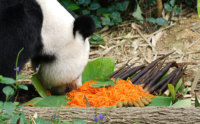 Longevity Noodles for Giant Pandas, River Safari