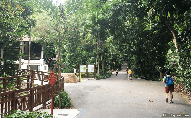 Main Path at Bukit Timah Hill