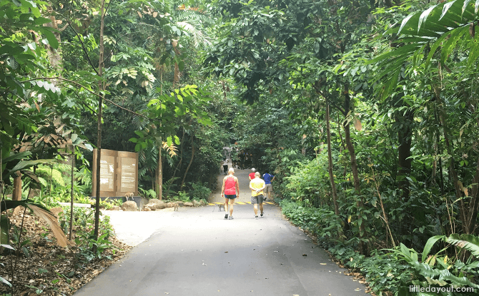 Nature Appreciation Walk at Bukit Timah Nature Reserve - 21 Mar 2020