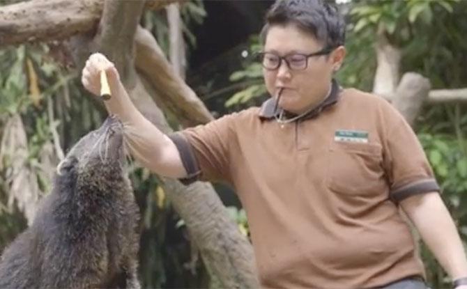Zoo-m Explorer Camp: Animal Senses