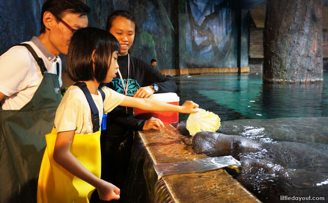 The little one following the instruction to show the food to the manatee first, before putting it into its mouth.