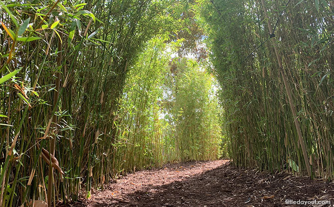 Bamboo tunnel trail