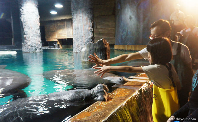 Telling the manatees that there is no more food with a familiar hand gesture.