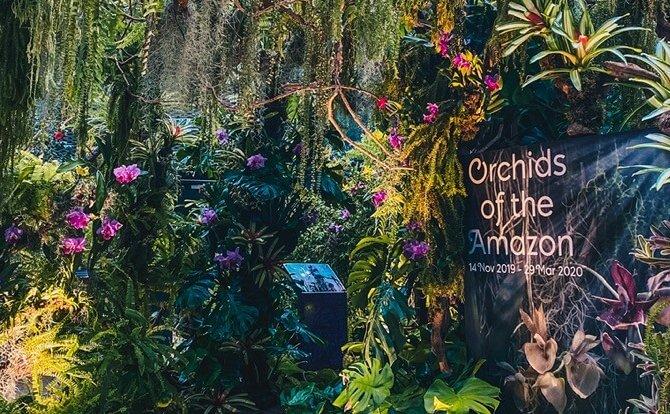 orchids of the amazon e1580736896589 1