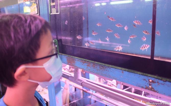qian hu fishfarm