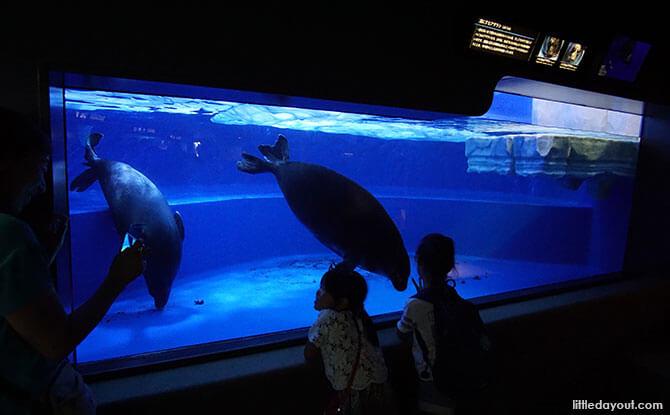 Lake Seals at Sunshine Aquarium