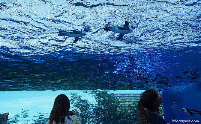 Penguins at Sunshine Aquaerium