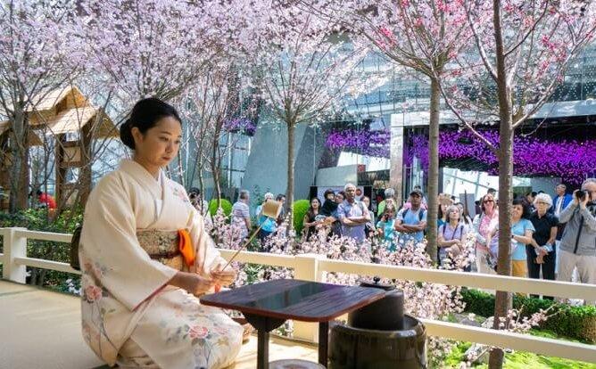 Sakura Matsuri: Cultural Programmes