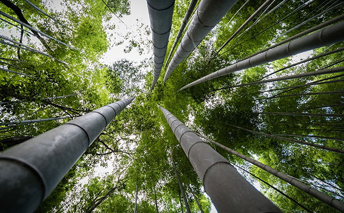 Arashiyama Bamboo Grove, Kyoto: Reaching Skyward